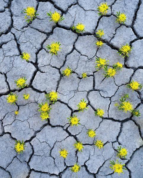 Utah Photograph - Desert Flowers by Larry Marshall