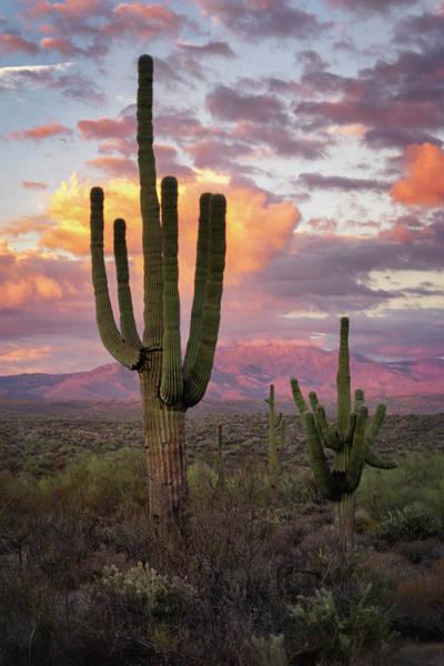 Wall Art - Photograph - Desert Foothills Sunset  by Saija Lehtonen