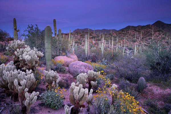 Wall Art - Photograph - Desert Garden by Ericfoltz