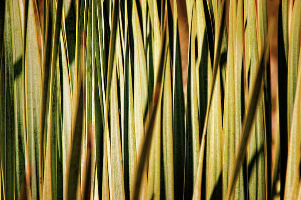 Photograph - Desert Grasses I by Leda Robertson