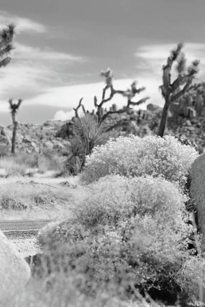 Wall Art - Photograph - Desert Joshua Tree Park by Steve K