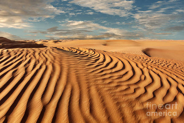 Wall Art - Photograph - Desert Landscape by Olga Grinblat