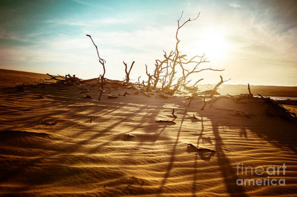 Wall Art - Photograph - Desert Landscape With Dead Plants In by Perfect Lazybones