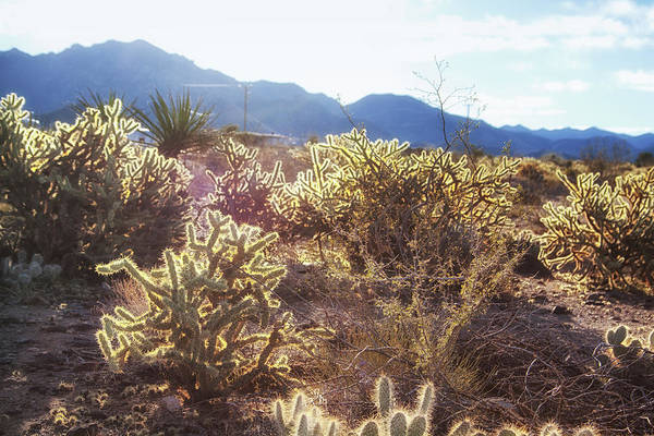 Photograph - Desert Morning Light by Tatiana Travelways