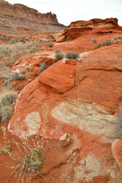 Photograph - Desert Mosaic Near Moab Utah by Ray Mathis