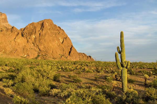 Yuma Photograph - Desert Mountain Cactus Classic by Photo By Chris Lemmen Www.chrislemmenphotography.ca