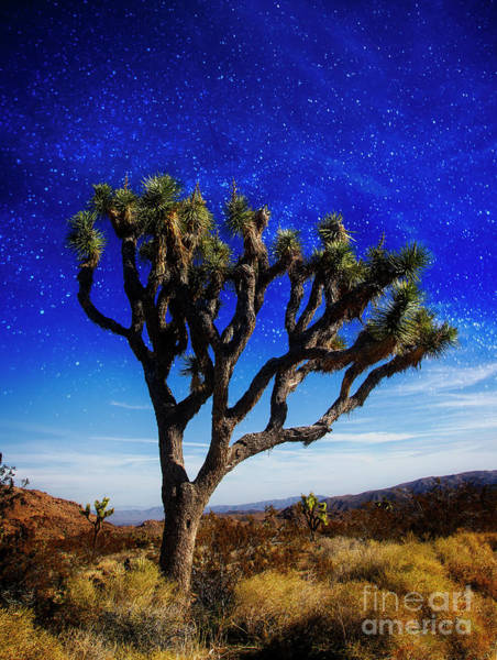 Photograph - Desert Night Sky by Scott Kemper