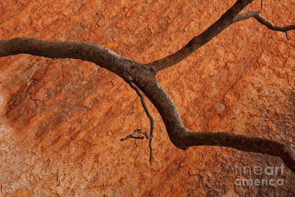 Wall Art - Photograph - Desert Orange by Mike Dawson