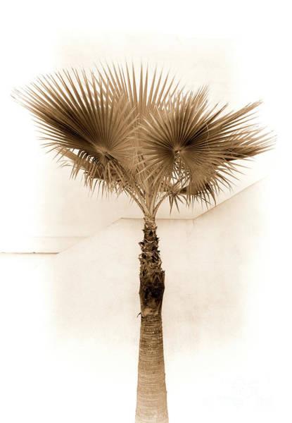 Palm Frond Digital Art - Desert Palm by Elisabeth Lucas