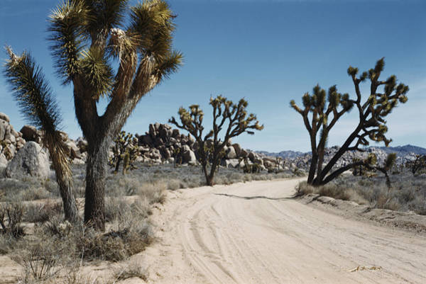 Yucca Brevifolia Photograph - Desert Road by Emil Muench