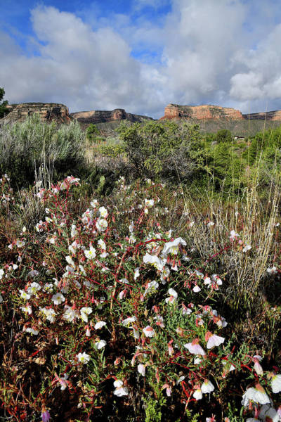 Photograph - Desert Roses And Colorado National Monument From Red Point by Ray Mathis