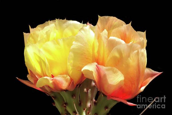 Wall Art - Photograph - Desert Roses by Douglas Taylor