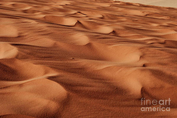 Wall Art - Photograph - Desert Sand by Jelena Jovanovic