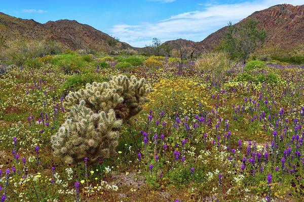 Photograph - Desert Spring by Dan McGeorge