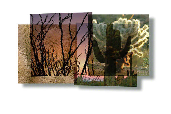 Photograph - Desert Suite No 3 by Mark Shoolery