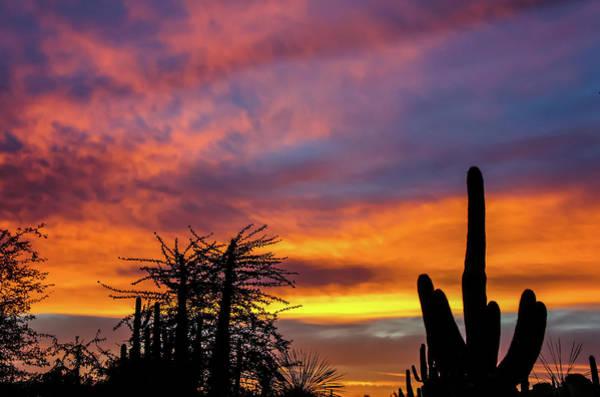 Photograph - Desert Sunset by Dawn Richards
