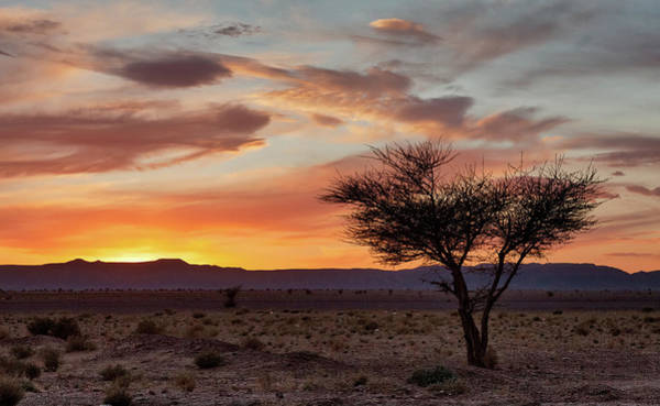 Photograph - Desert Sunset II by Peter OReilly