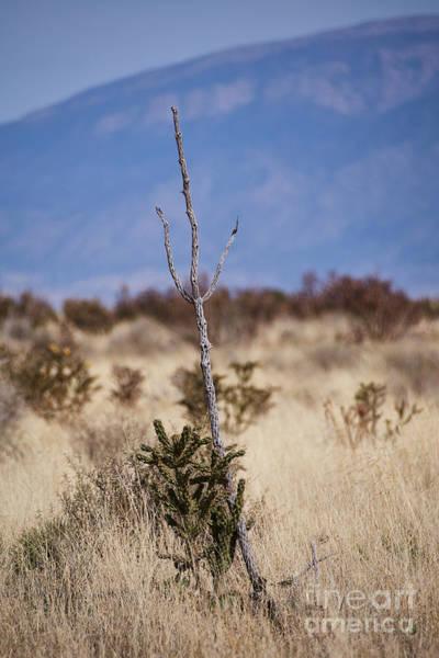 Photograph - Desert Trident by Robert WK Clark