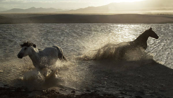 Photograph - Desert Water Stallions by Kent Keller