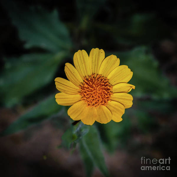 Juxtaposition Photograph - Desert Yellow Beauty by Robert Bales