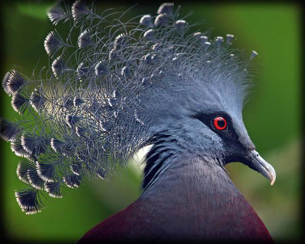 Art Prints Photograph - Designer Pigeon by Jaki Good Photography - Celebrating The Art Of Life