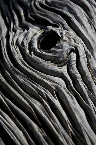 Knot Hole Photograph - Detail Of A Dead Tree by Tobias Titz