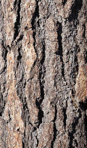Photograph - Detail Of Ponderosa Pine Bark  by Steve Estvanik