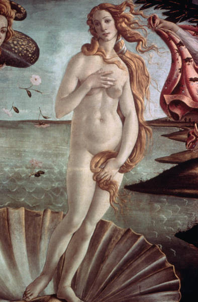 Botticelli Wall Art - Photograph - Detail Of The Birth Of Venus By Sandro by Bettmann