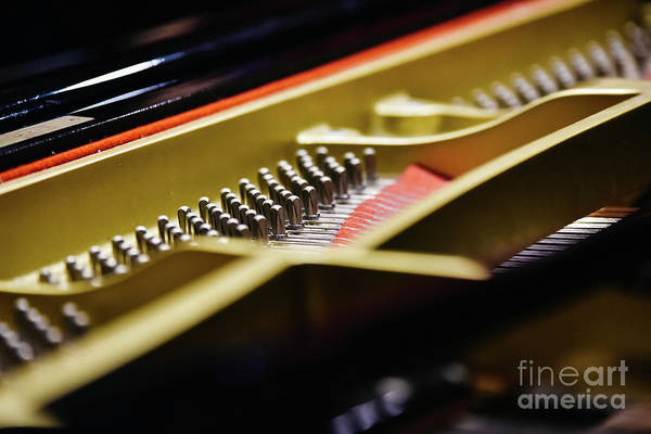 Photograph - Detail Of The Interior Of A Piano With The Soundboard, Strings And Pins. by Joaquin Corbalan