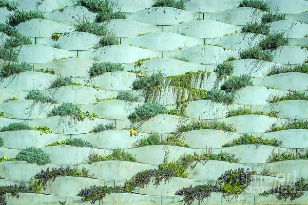 Photograph - Detail Of Vertical Garden, Background With Sherds Of Cement And Plants Of Planted Colors. by Joaquin Corbalan