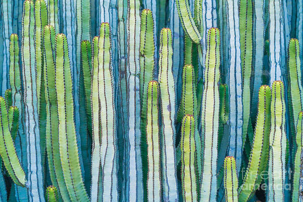 Wall Art - Photograph - Detail View Of The Cardon Cactus In by Ed Reardon