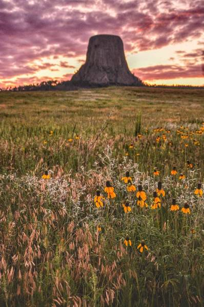 Art Print featuring the photograph Devil's Tower And Sunflowers by Chance Kafka