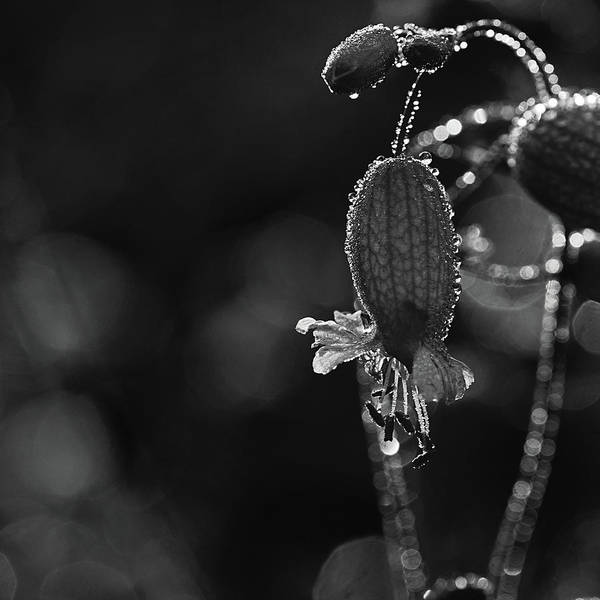 Wall Art - Photograph - Dew Collector 8 by Susan Capuano