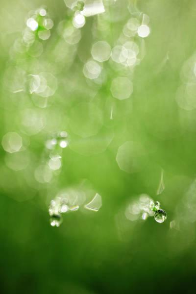 Photograph - Dew Drops by Seiji Nakai