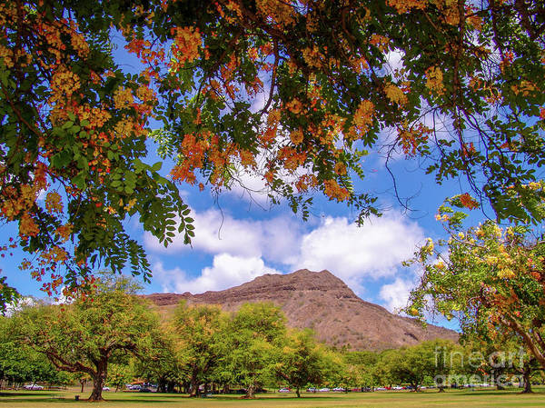 Photograph - Diamond Head Crater At Queen Kapiolani Park - Hawaii Tropical Flowers by D Davila