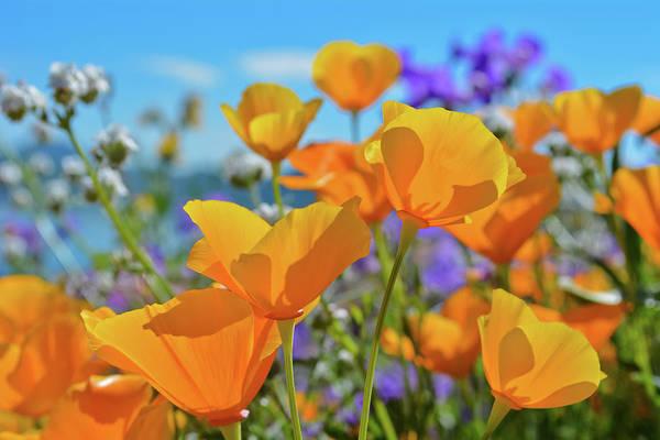 Photograph - Diamond Valley Wildflowers by Kyle Hanson