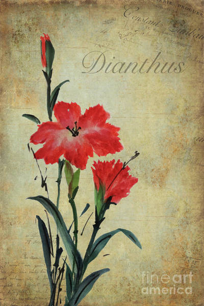 Wall Art - Painting - Dianthus by John Edwards