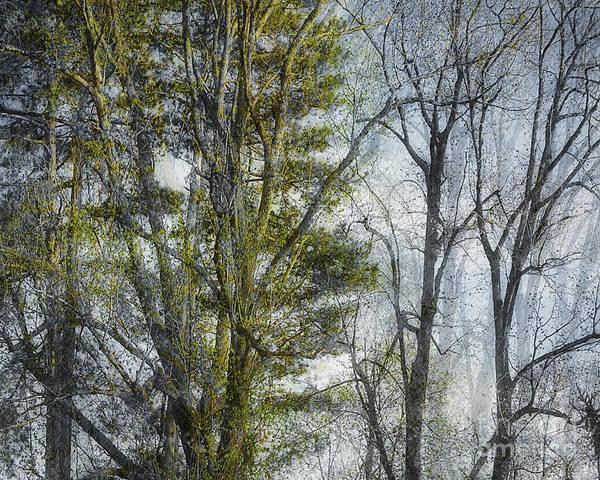 Photograph - Die Magie Des Waldes by Edmund Nagele