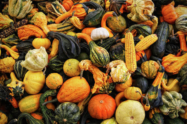 Retail Photograph - Different Types Of Fall Squash by Www.infinitahighway.com.br