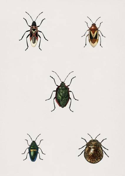 Wall Art - Painting - Different Types Of Insects Illustrated By Charles Dessalines D' Orbigny 1806-1876 by Charles Dessalines D Orbigny