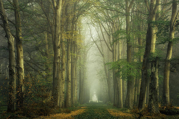 Wall Art - Photograph - Different World by Martin Podt
