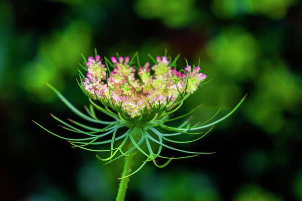 Photograph - Digital Flower Still Life by Robert Ullmann