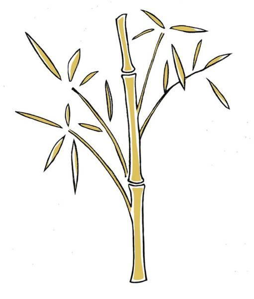 Bamboo Digital Art - Digital Illustration Of Bamboo Shoots by Anna Hymas