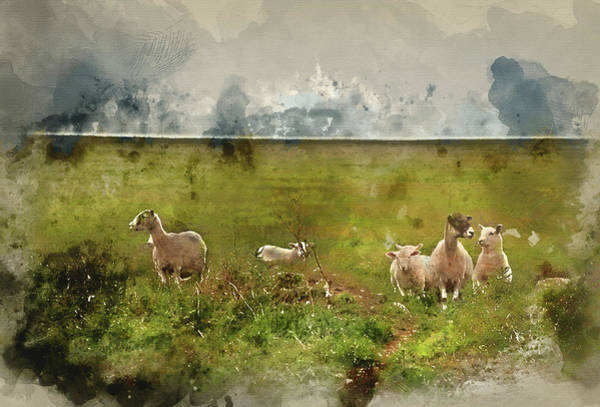 Ovine Photograph - Digital Watercolour Painting Of Farm Sheep In Landscape On Storm by Matthew Gibson