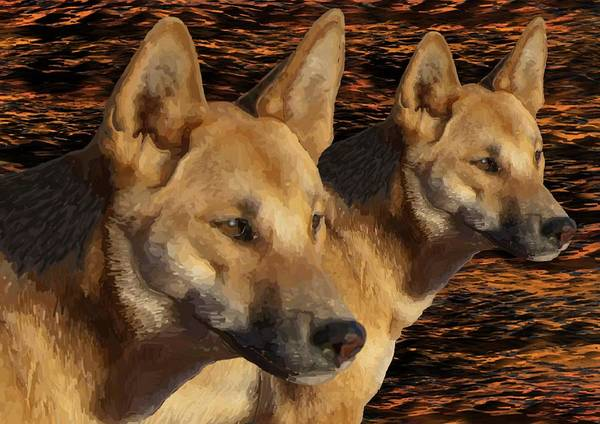 Drawing - Dingoes  by Joan Stratton