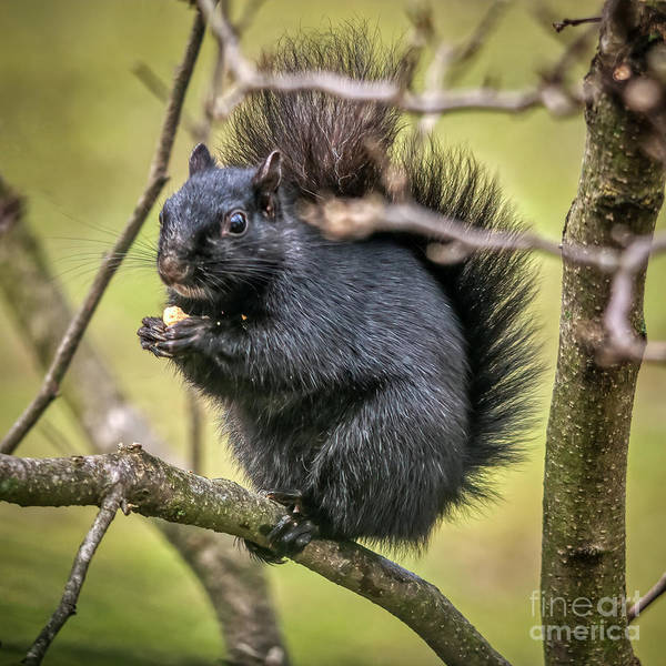 Photograph - Dining In The Branches by Janice Pariza