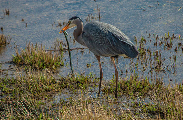 Photograph - Dinner Time by Doug Scrima