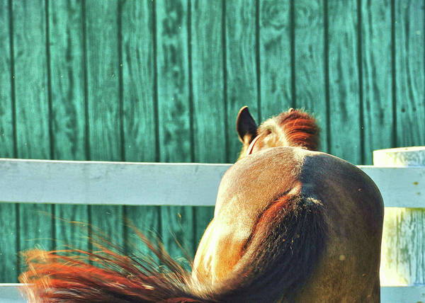 Photograph - Dinner Time by JAMART Photography