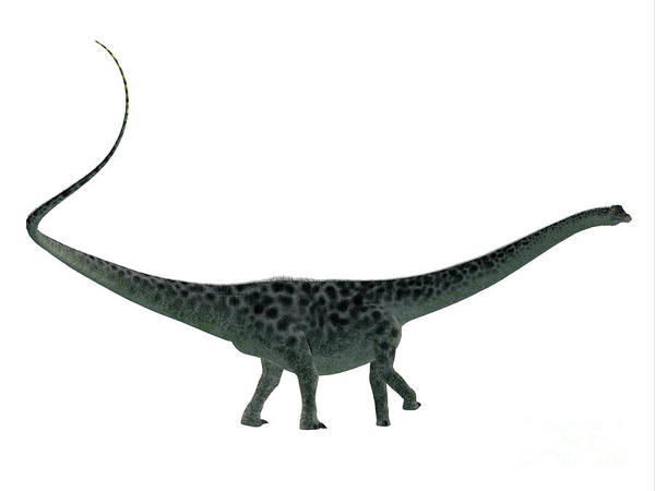Colorado Wildlife Digital Art - Diplodocus Dinosaur Side Profile by Corey Ford
