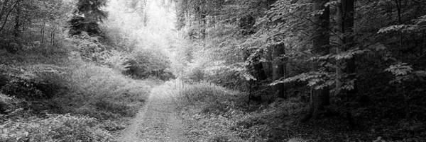 Wall Art - Photograph - Dirt Road Passing Through Forest by Panoramic Images